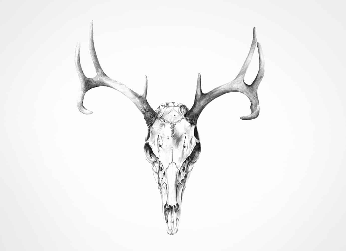 skull illustration in pencil